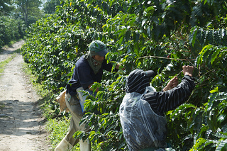 Trouble Brews for Brazilian Coffee Exporters