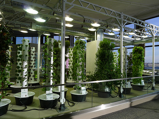 The Implications of Vertical Farming on Global Food Markets